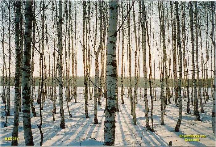 pic_m_vm_07_birch_wood.jpg