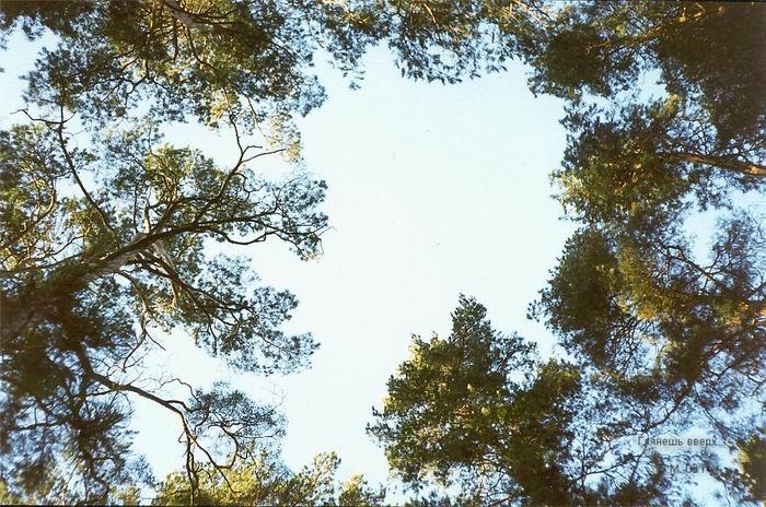 pic_m_vm_09_look_upward.jpg